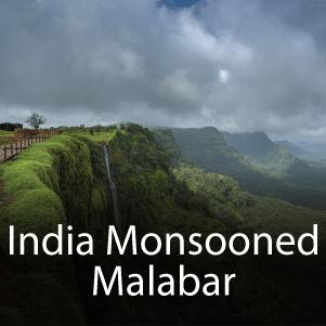 India Monsooned Malabar Blend